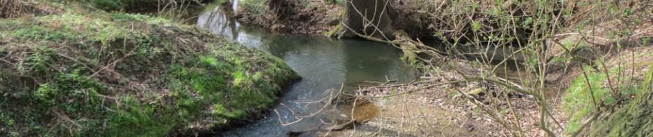 Das Mutzschener Wasser oberstrom Neichen vor der Mündung in die Vereinigte Mulde.