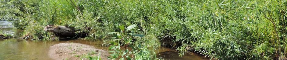 Aufgrund der abwechslungsreichen Uferlinie und der eingebauten Sohlstrukturen sind trotz der begrenzten Flächenverfügbarkeit gewässertypische Sohlenstrukturen wie Kiesinseln, Kolke und Flachwasserzonen entstanden.