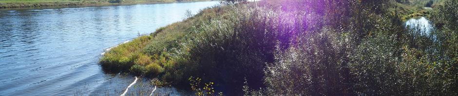 Mündung des Elbseitenarmes in die Elbe