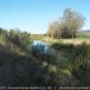 10 Elbseitenarm Blickpunkt 3 – Blick vom Elberadweg in Fließrichtung