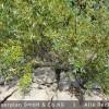Weidensetzstangen und Buschlagen bilden Wurzeln und treiben aus.